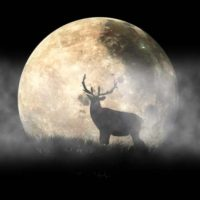 Elk Moon Creations